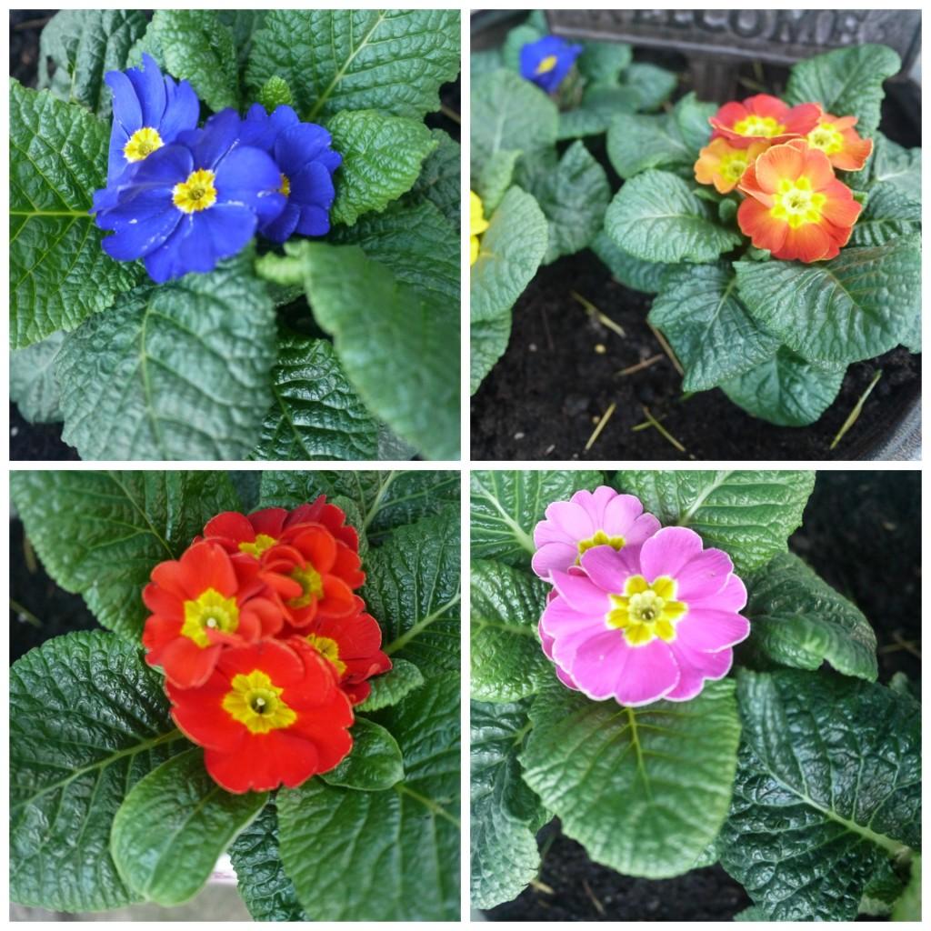 garden-flowers